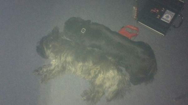 teake en blacky voor de campingkachel.#campingthout slechte pic,maar te leuk om niet te tweeten