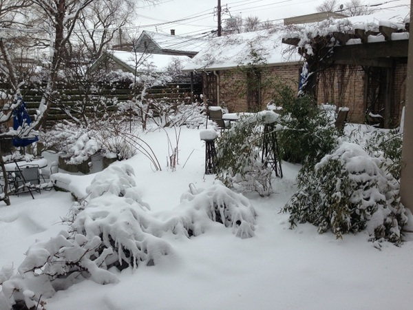 My garden is so quiet under this beautiful blanket of snow!
