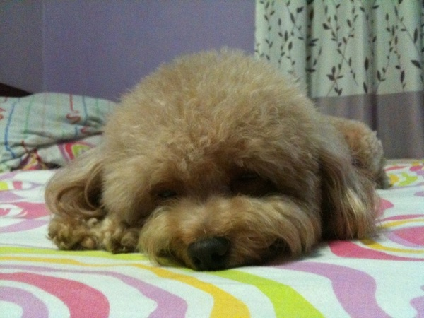 Aft bustling for a few hours,this tiny creature is finally falling asleep. #socute