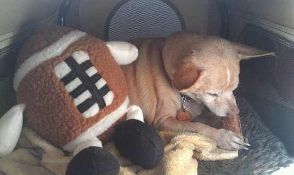 Chillin in my crib, hanging with my cool football toy from @IcyPinkLemonade!