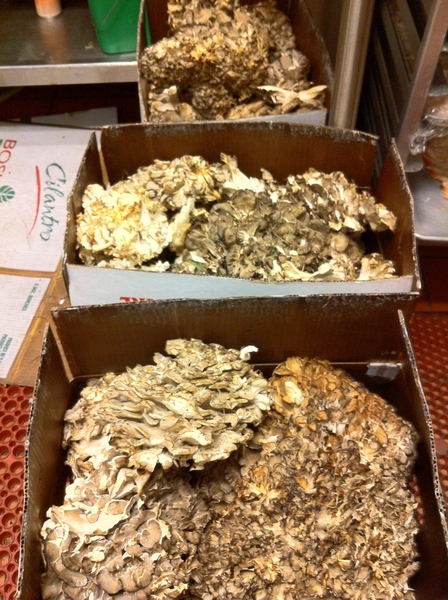 40# of wild hen if the woods mushrooms just walked in the back door with Nick Nichols!