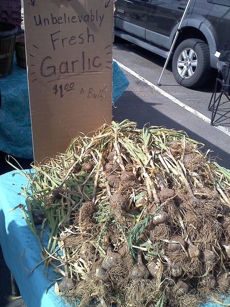 Garlic so fresh the dirt is still attached. #Taos #NM #farmersMarket