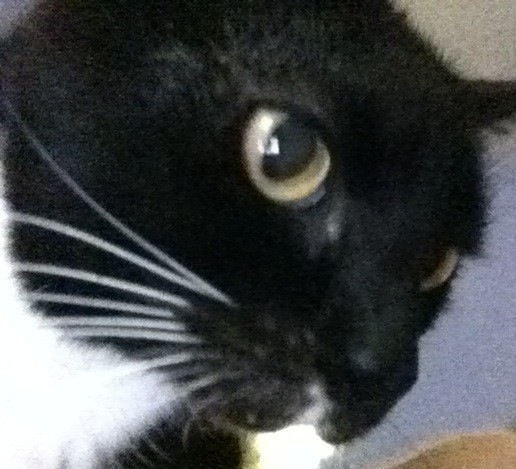 This is what it looks like when my cat Woody sniffs your eyeball. Now you know. via @batzz 