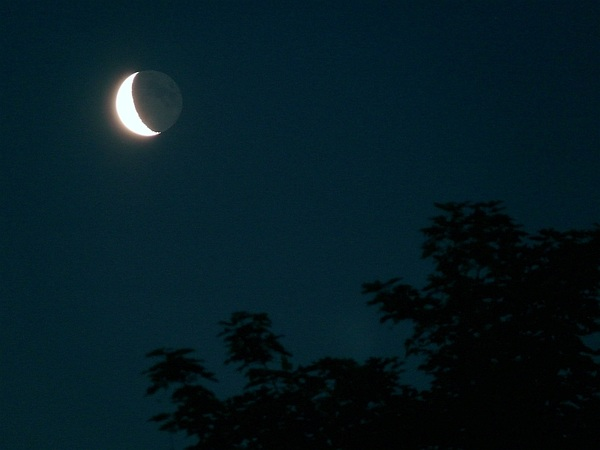 Waning crescent #moon with #earthshine and ash tree just now