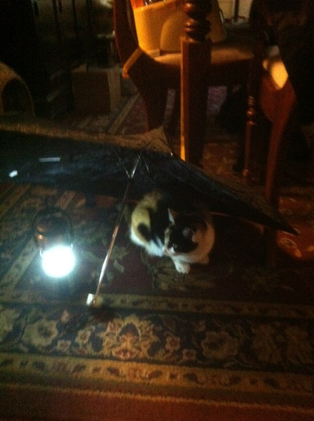 Cali loves to camp even if it's under an umbrella in the dining room!  #campingiscool