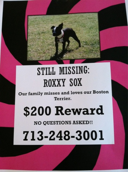 Missing Dog in my neighborhood. Just getting the word out.