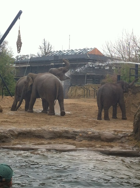 Got a great picture of a thirsty elephant having her bath!  @DublinZoo
