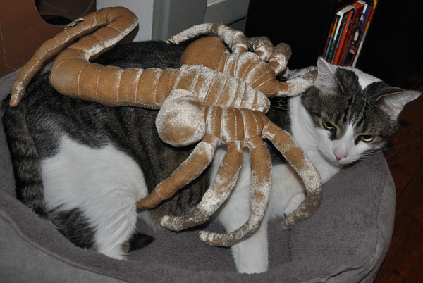 Game Over Man! Get dis Alien Facehugger Plush at #SCIFIpawty from r pals @thinkgeek