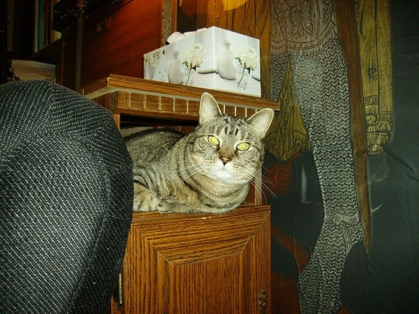 @AquamarineSteph Yup. Right next 2 me now. She's an indoor cat, but she has her hiding places. 